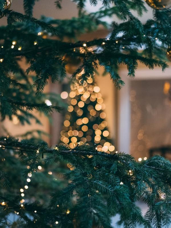 aspirational christmas tree shot